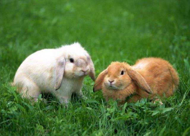 属兔生肖运势每日运程(属兔人今日运势财运)-第1张图片-天下生肖网
