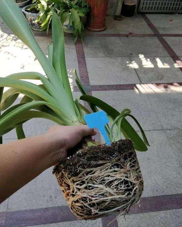 绿化墙植物墙_植物墙,室内_植物墙室内