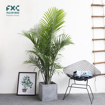 人造植物墙新闻_人造植物墙_植物墙报价