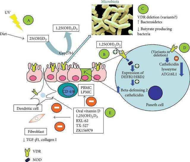 esquema del metabolismo con el estrés