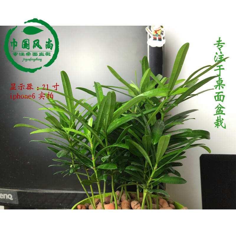 植物墙报价_人造植物墙新闻_人造植物墙