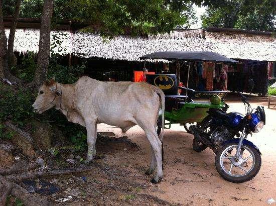 angkor batmandriver- day tour