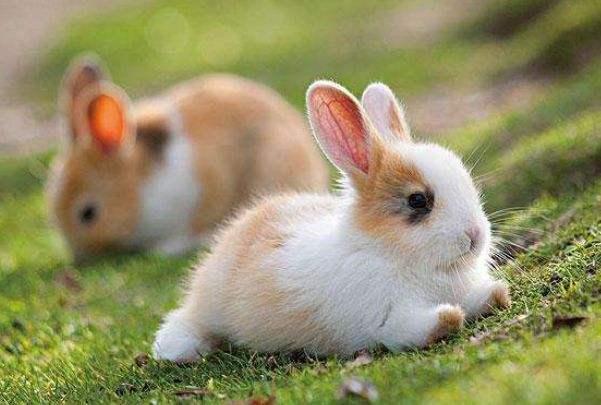 属兔生肖运势每日运程(属兔人今日运势财运)-第2张图片-天下生肖网
