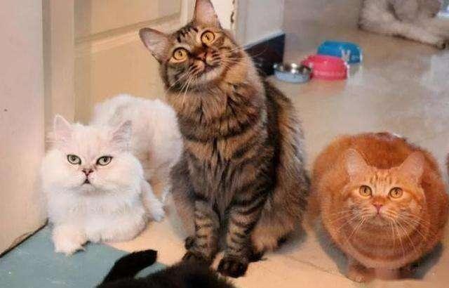 猫为什么不爱和人亲近 猫咪为什么不爱让人抱
