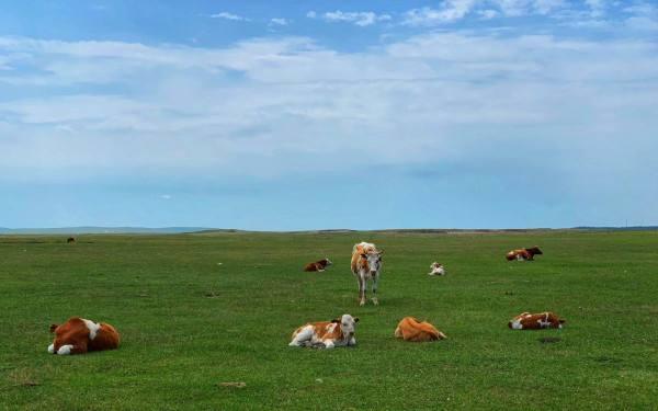 内蒙古草原攻略游