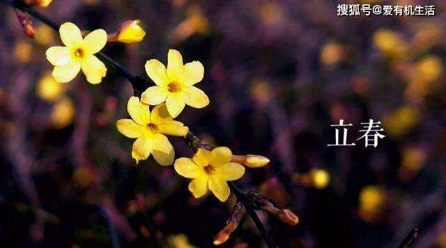 打春吃什么_打春吃萝卜代表  第1张