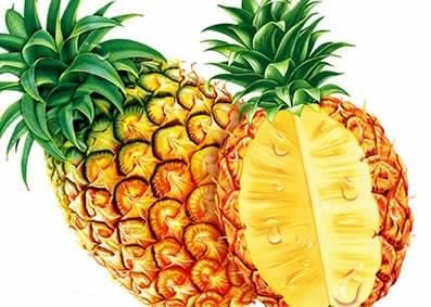 米菠萝_米菠萝_摄影 米菠萝